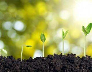 Seed-Growth